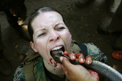 A U.S. Marine drinks the blood of a cobra during a jungle survival exercise at a military base in Chon Buri province