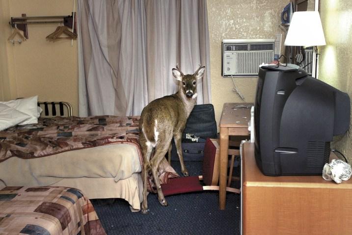 Deer Motel Crash Wisconsin