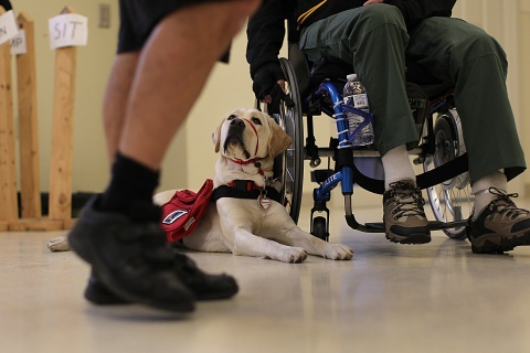 Nonprofit Reaches Out To Bombing Victims With An Offer Of Service Dogs